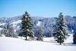 canvas print picture - wunderschöne winterlandschaft mit wald