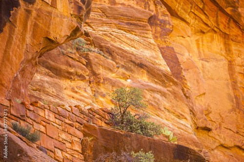 Tuinposter Canyon Trail through red rocks in Zion National Park