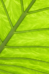 Close up of leaf pattern