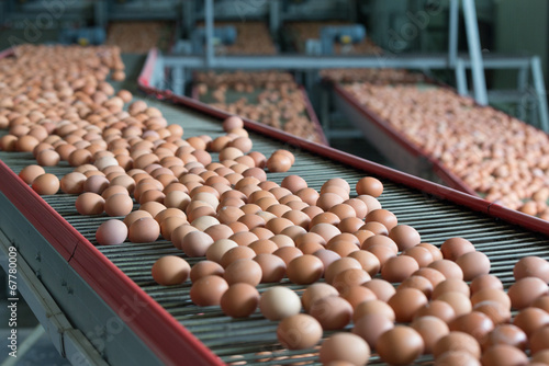 Foto op Plexiglas Egg Eggs on a poultry factory