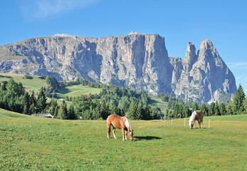 der Schlern auf der Seiser Alm in Südtirol nahe Kastelruth