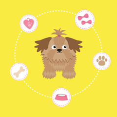 Little glamour tan Shih Tzu and dog stuff. Dash line circle.