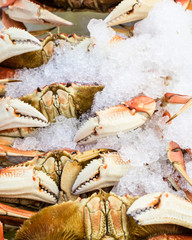 Fresh Dungeness crab on ice