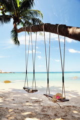 Swings tied to a palm tree