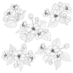 Apple tree flowers and leaves set contours