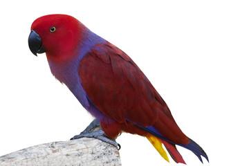 Colorful cockatoo bird 1