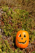 Halloween pumpkin on a grass