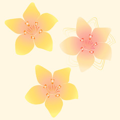 Floral background seamless pattern yellow plumeria