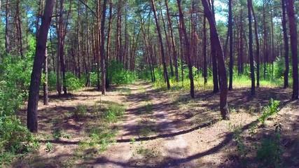 aerial pine wood