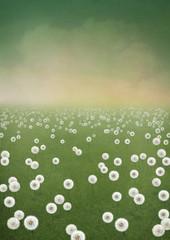 Background field of dandelions