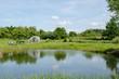 village pond greenhouse in summer