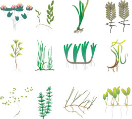 Aquatic plants vector