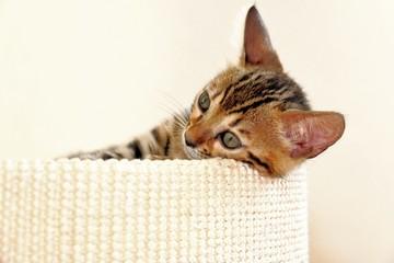 benal katze kitten; baby schlafen