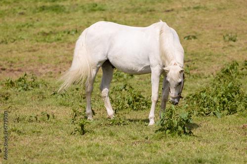 canvas print picture Pferd auf der Weide