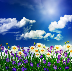 daisy flowers and bells on a background of blue sky with clouds