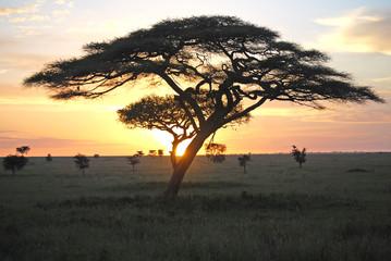 tree serengeti