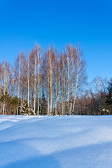 Beautiful winter landscape with snow and birches trees