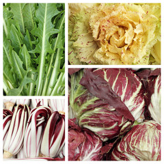 colorful chicory leaf vegetable pattern