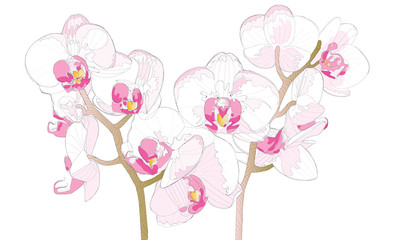 Beautiful Orchidaceae