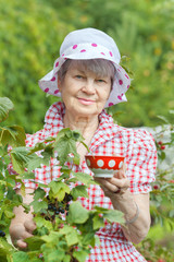 Senior woman standing near bushes of black currant