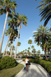 Clearwater Florida Palm Trees