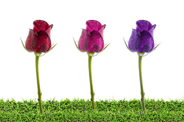 Roses on grass isolated on white , Clipping path