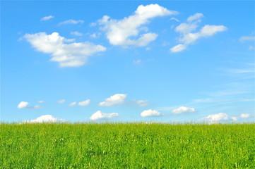 Himmel mit grasgrüner Wiese für Textfläche / Hintergrund