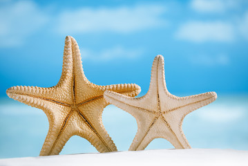 two giant starfish with white sand,  ocean , beach and seascape
