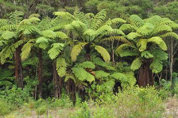 Dense giant fern bush