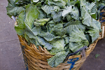 Fresh cabbage in the basket