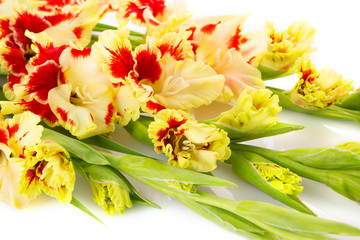 Colorful red and yellow gladiolus \ horizontal