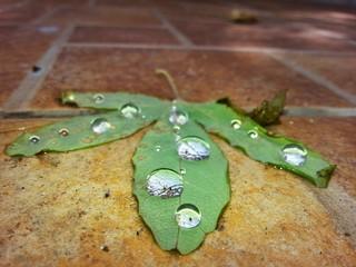 Foglia verde con gocce di pioggia