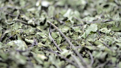 Dried Mint (loopable video)