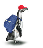 Funny penguin with backpack and baseball cap.