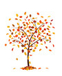 Autumn tree with pear leaves, isolated on white background.