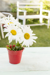 bright daisies stand in a bucket