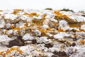 Lichens on limestone cliff