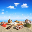 canvas print picture - Conch shells on beach