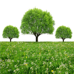 Trees on meadow isolated on white background
