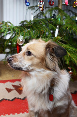 dog and the christmas tree