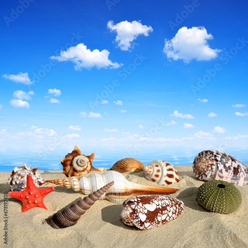 canvas print picture Conch shells on beach