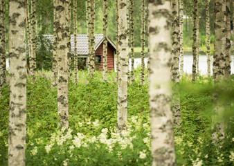 Birkenwald & Sauna