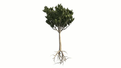 Growing tree with Alpha Channel