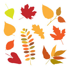 Seth autumn leaves for design