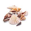 Seashells - 67822053