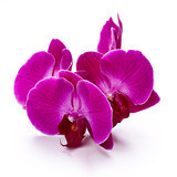 Fototapeta Purple orchid flowers