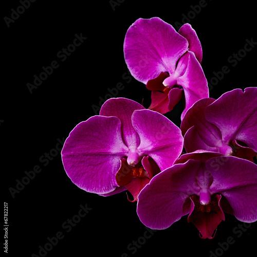Fotobehang Orchidee Purple orchid flowers