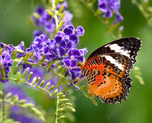 Butterfly on a violet flower - 67822853