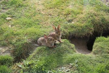 Kaninchen Hasen Babys