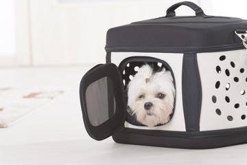 Dog sitting in transporter